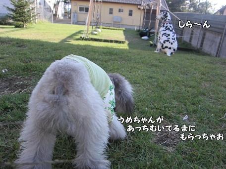 IMG_3435-a.jpg