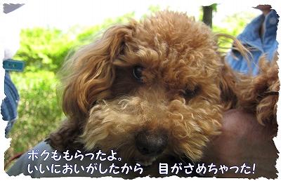 IMG_4864-1.jpg