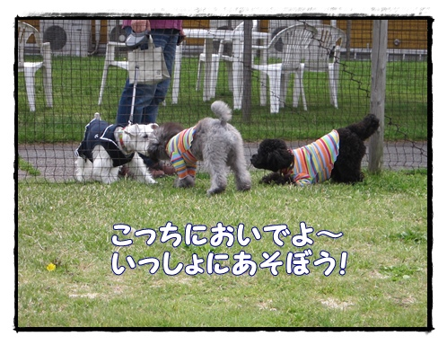 IMG_6157-1.jpg