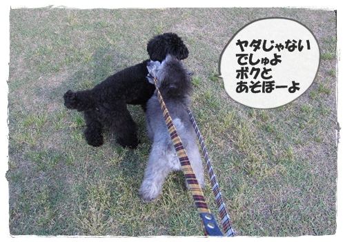 IMG_6264-1.jpg
