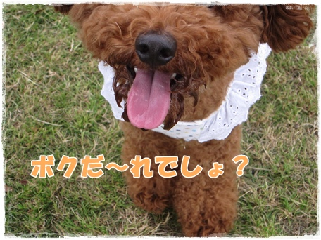 IMG_8212-1.jpg