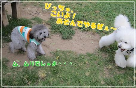 IMG_8334-1.jpg