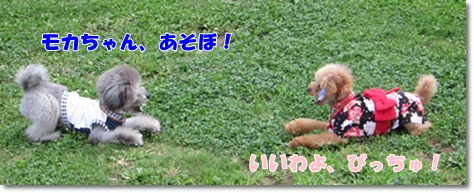 IMG_8914-1.jpg
