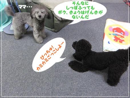 IMG_9108-1.jpg
