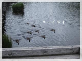 IMG_9850-1.jpg