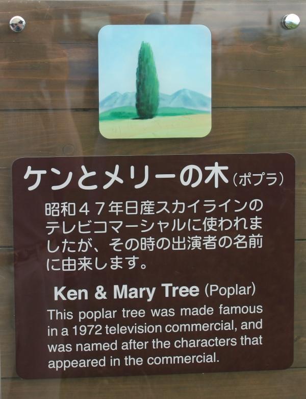 美瑛・ケンメリの木01