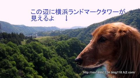 IMG_0010-1.jpg