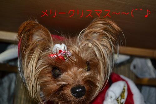 DSC_0532_20121224200257.jpg