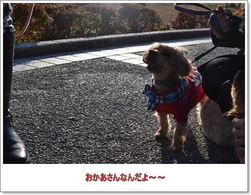 DSC_0733.jpg