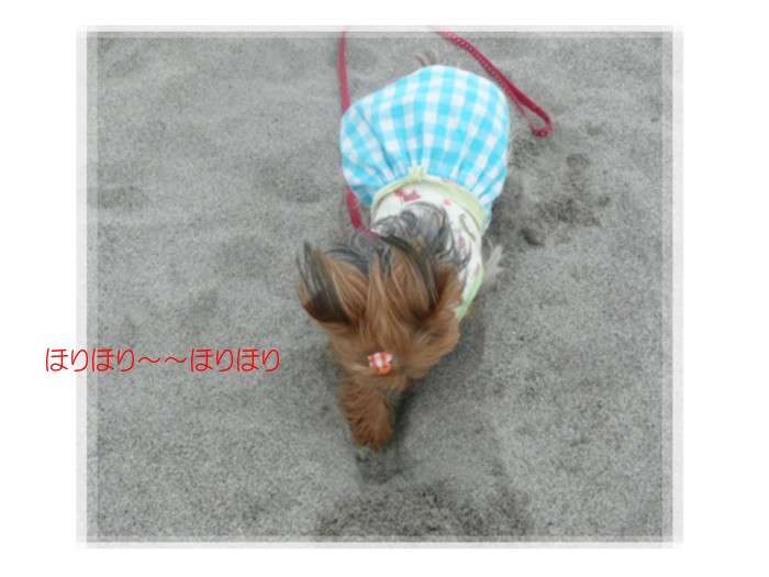 P1020896.jpg
