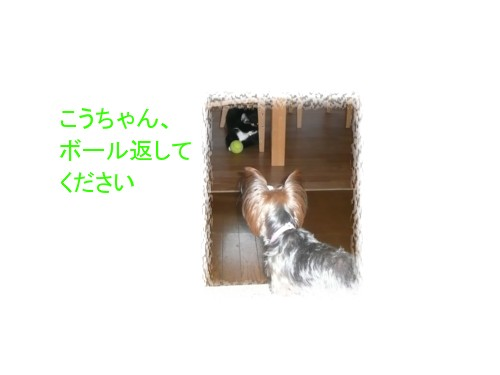P1030641.jpg