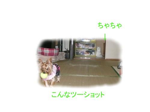 P1030683.jpg