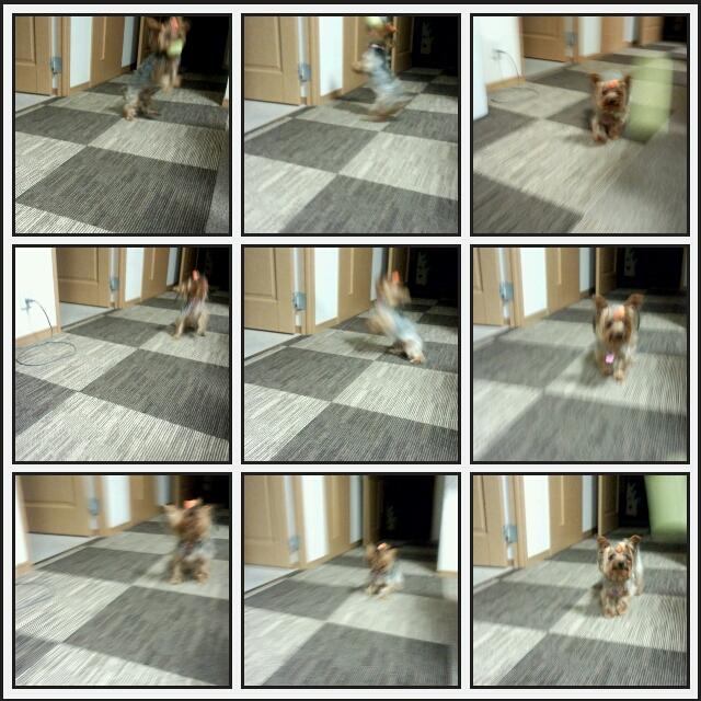 PicsArt_1351078994098.jpg