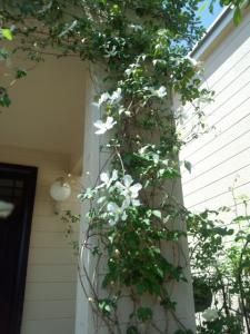 木々花花4
