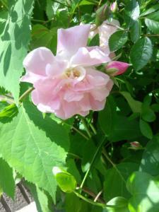 木々花花5