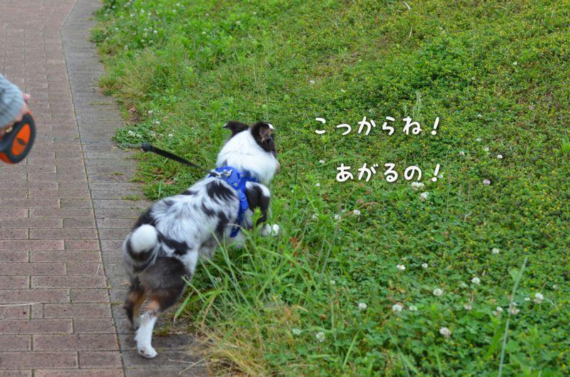 IMG_7157.jpg