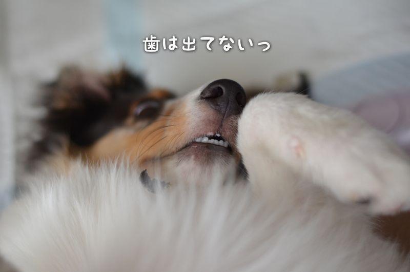 IMG_7264.jpg