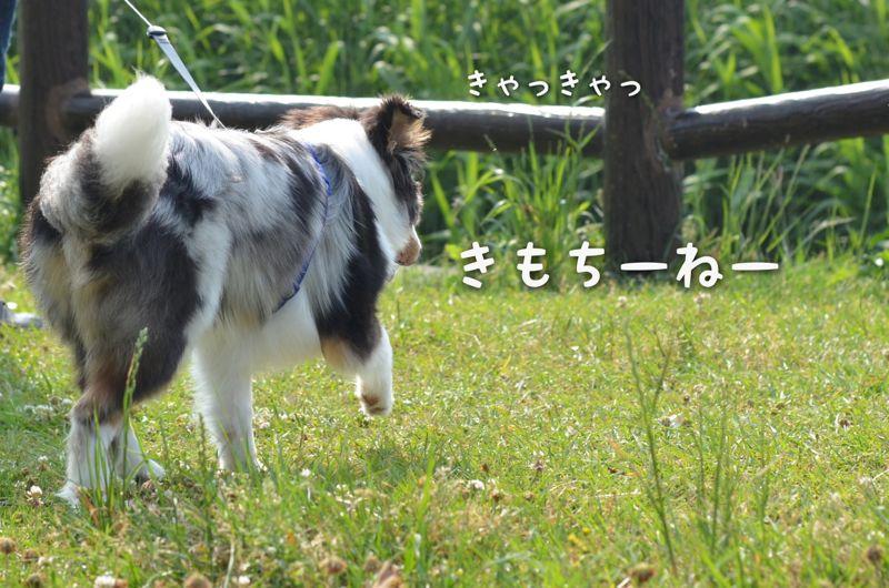 IMG_7294.jpg