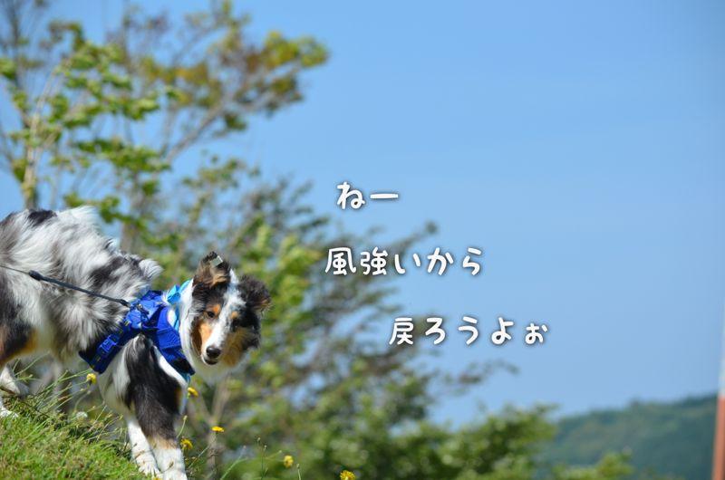 IMG_7329.jpg