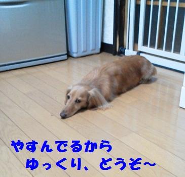NEC_0375.jpg