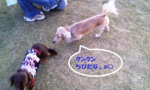 NEC_0698_20121126133254.jpg