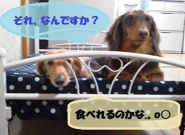 NEC_0848_20121228101700.jpg