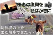 tsu_bana.jpg