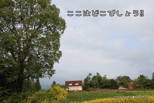 01-IMG_4071.jpg