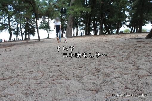 06-IMG_5542.jpg