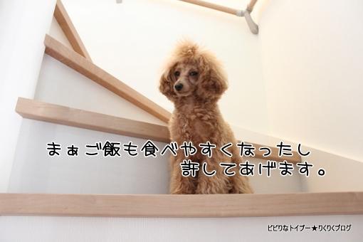 1-IMG_8187.jpg