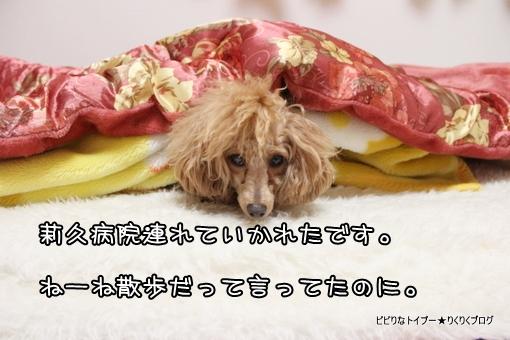 1-IMG_9613.jpg