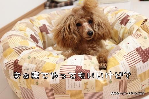 10-IMG_7803.jpg