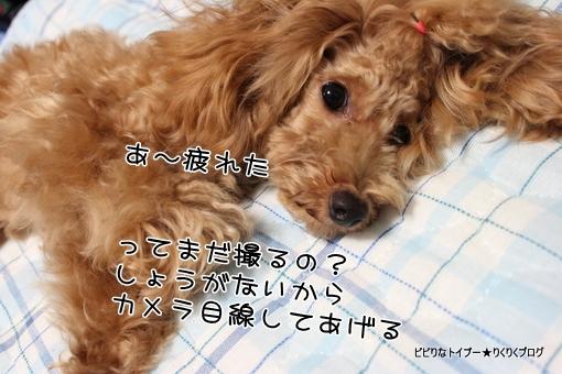 12-IMG_6062.jpg