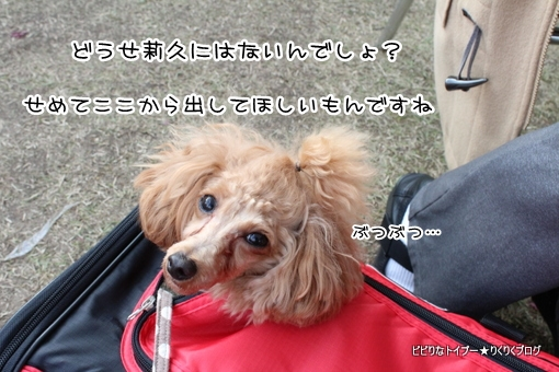 14-IMG_8646.jpg