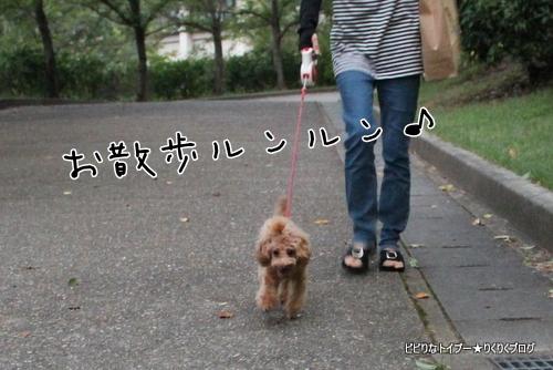 3-IMG_5139.jpg