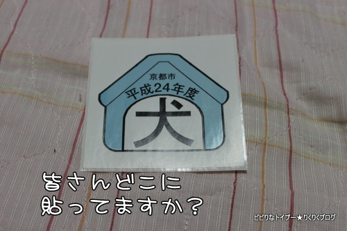 3-IMG_6661.jpg