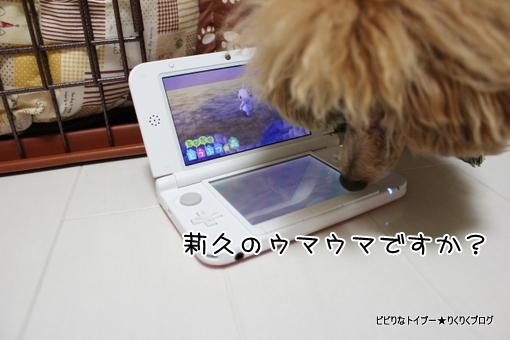 3-IMG_9070.jpg