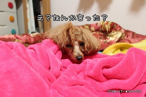 3-IMG_9625.jpg