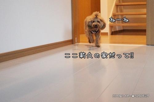 5-IMG_6709.jpg