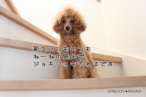 6-IMG_8191.jpg