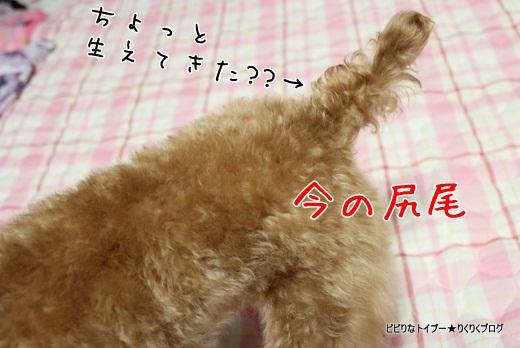 7-IMG_4639.jpg