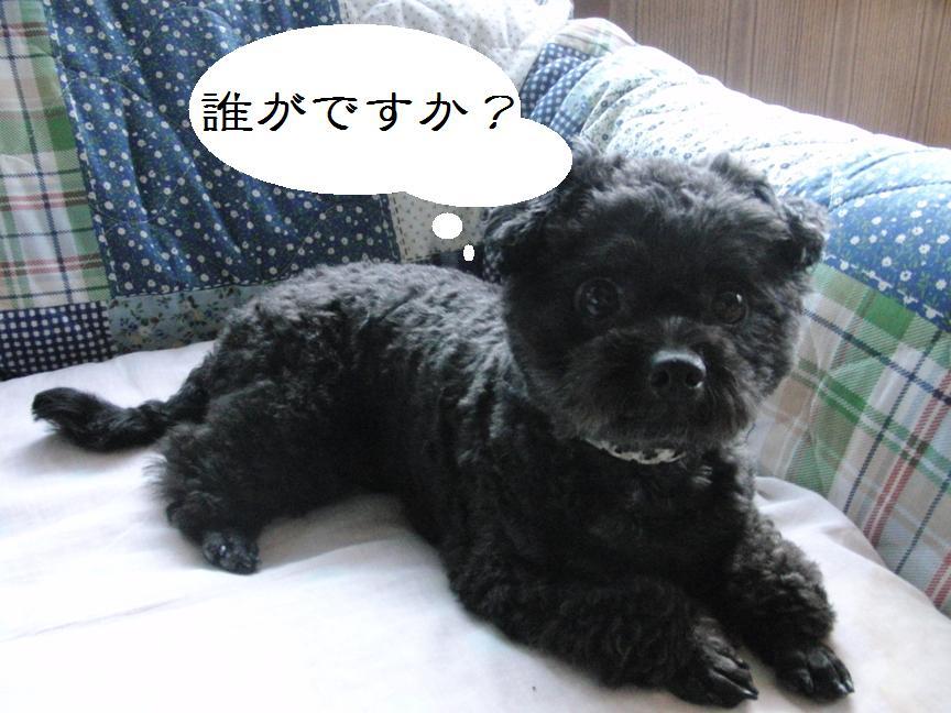 001_20120511175636.jpg