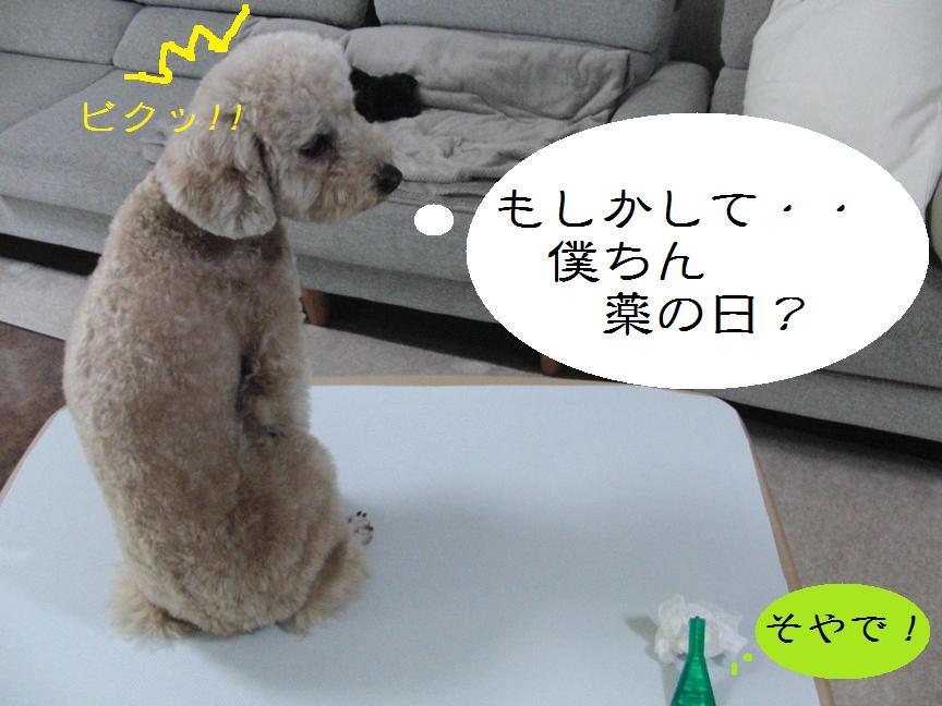 009_20120501103041.jpg