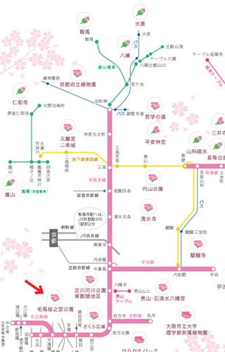 20130330-keihansakura.jpg