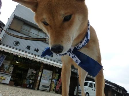 柴漬けぽ庵24