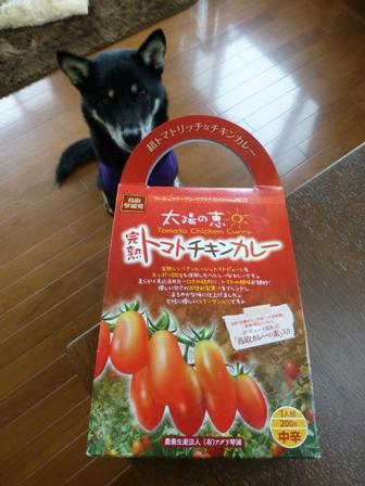 トマトチキンカレー8