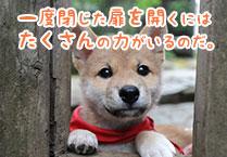 マメシバ一郎フーテンの芝二郎名言6