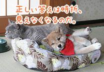 マメシバ一郎フーテンの芝二郎名言7
