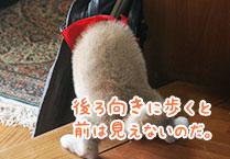 マメシバ一郎フーテンの芝二郎名言8
