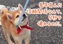 マメシバ一郎フーテンの芝二郎名言10